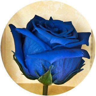 Доставка синих роз по Киеву