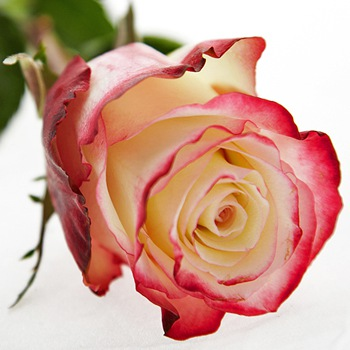 Заказать розы в Киеве поштучно в офис, на дом