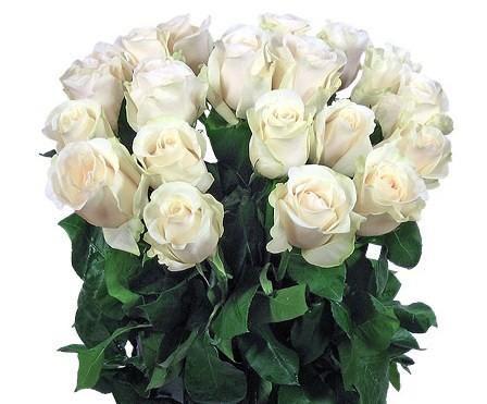 Букет белых роз Белая роса,