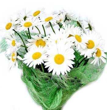 Фото букет ромашек цветов