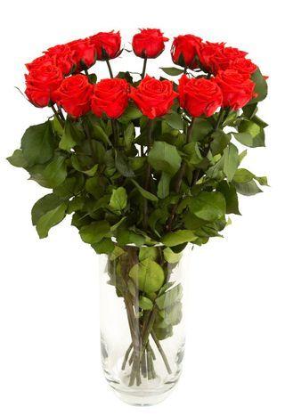 Заказать шикарные алые розы девушке, женщине