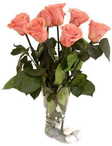 Французские розы купить в украине цветы с доставкой дзержинский