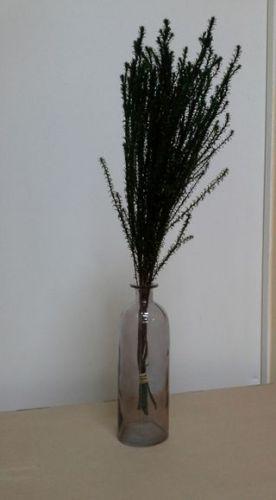 Красивая зелень для цветов, Флора-Сакура, доставка