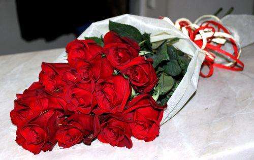 Красные розы голландские