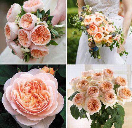 Розы дэвида остина украина купить доставка цветов презентсити москва
